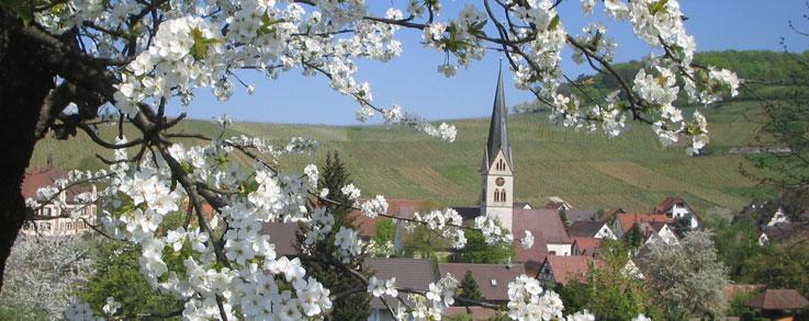Frühling in Ebringen