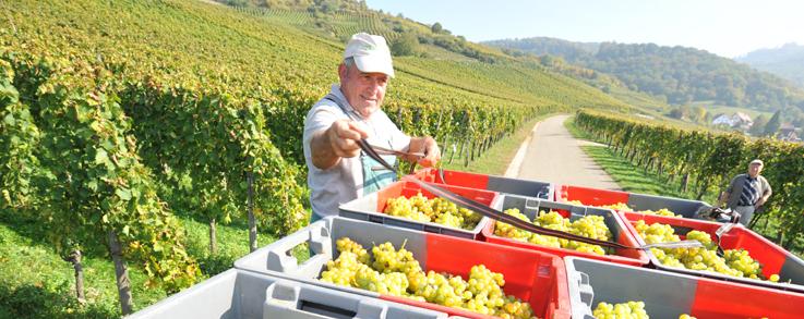 Ebringer Weinbaugbiete