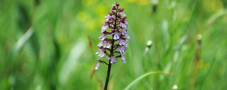 Orchidee im Sumser Garten