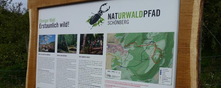 Infotafel Naturwaldpfad