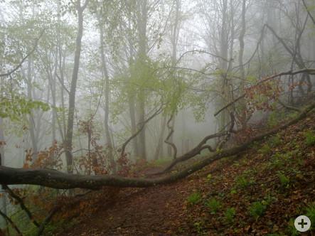 Bild des Monats November - NatUrwaldpfad - fotografiert von Frau Elli Moßmann